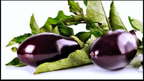 eggplant_leavesr