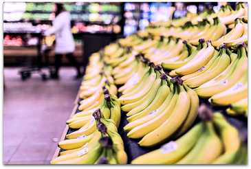 A rack of bananas with grocery shopper in the background.