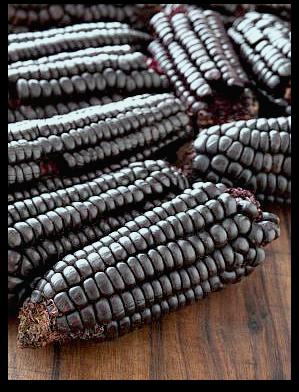 Purple Corn used to make Inca Tea