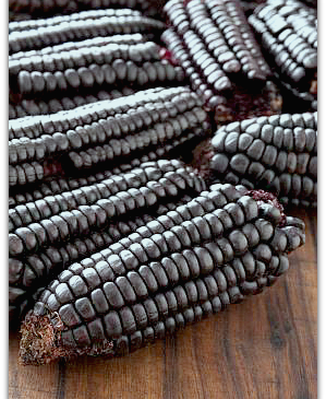 Purple Corn used to make Inca Tea